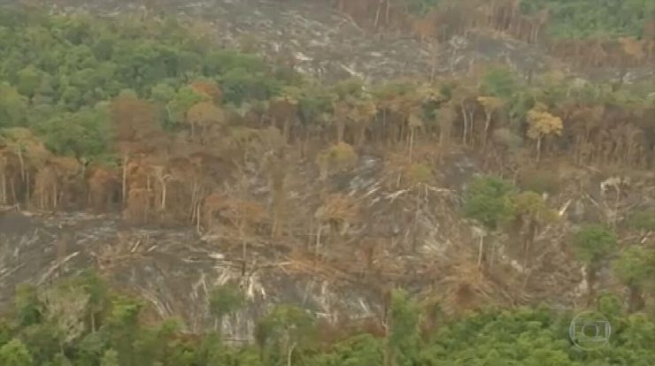 British and European supermarkets threaten to boycott Brazil for deforestation |  Agribusiness