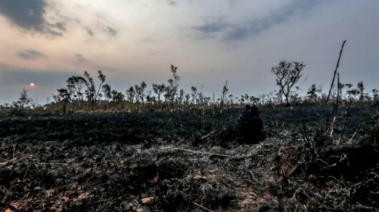 UK retail chains threaten to boycott products from Brazil due to deforestation