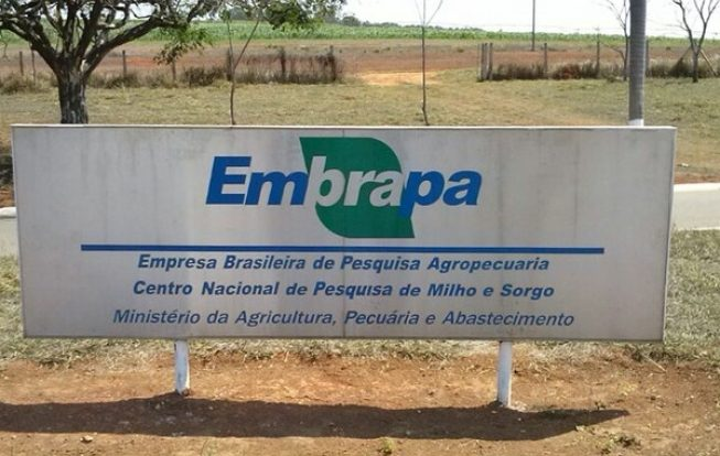 The Embrapa Scientific Publications Portal is accessed in the US - Economy