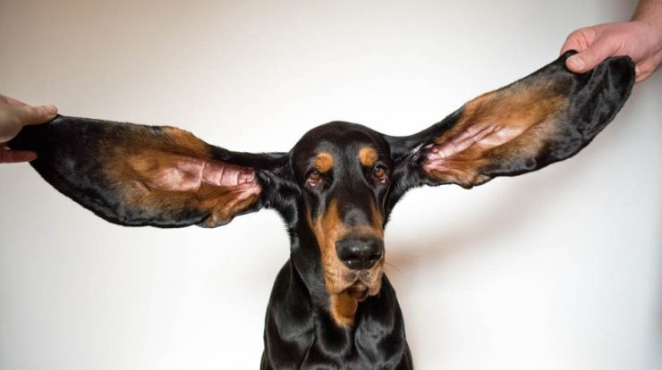 eared dog and animal scooter;  The most intriguing Guinness World Records 2022