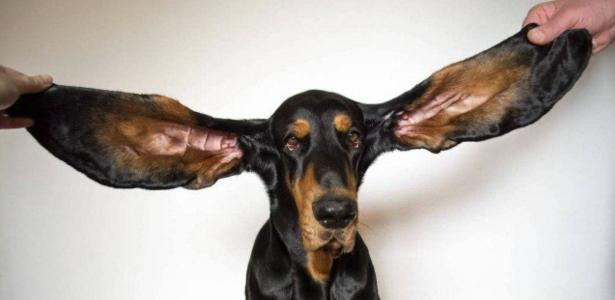 Guinness book reveals new records with the dog with the ear and the Mayan wave
