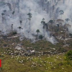 COP26: Unlike the world, Brazil has seen an increase in carbon dioxide emissions in a year of the epidemic